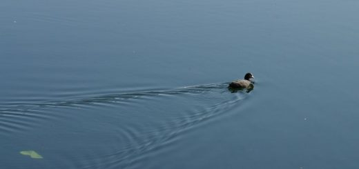 Featured - Ente